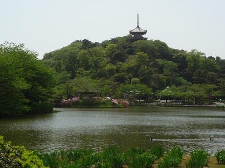 三渓園大池①