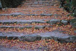 階段紅葉小