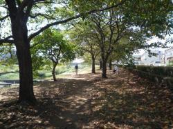 川原の並木