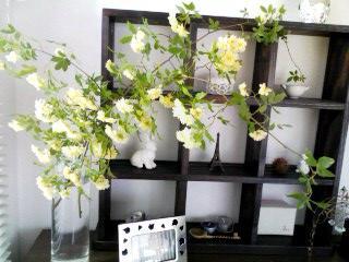 rose10may2011.jpg