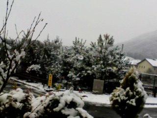 snow12jan2011.jpg