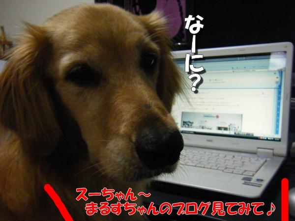 DSCF0003_20110831235504.jpg