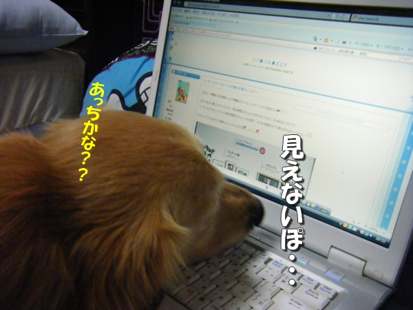 DSCF0007_20110831235502.jpg