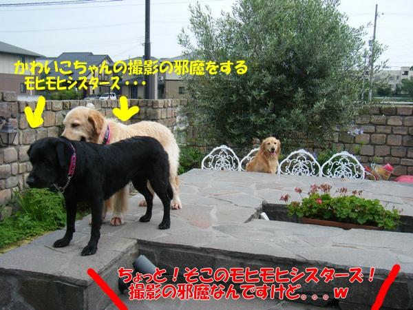 DSCF1015_20110709003554.jpg