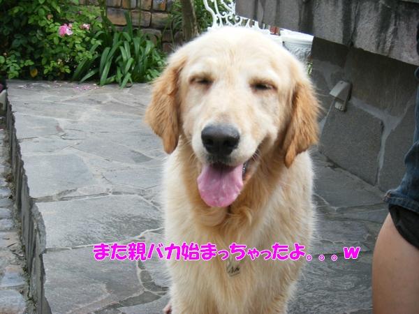 DSCF1021_20110709003630.jpg