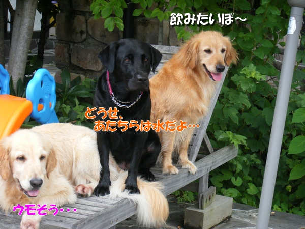 DSCF1031_20110709003629.jpg