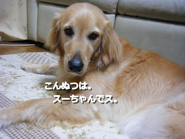 DSCF1035_20110703015223.jpg