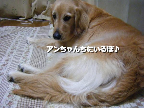 DSCF1042_20110703015222.jpg
