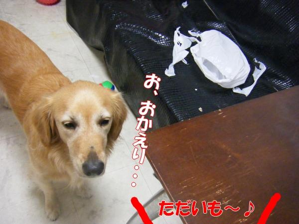 DSCF1051_20111001221641.jpg