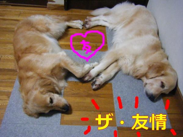 DSCF1056_20110703015220.jpg