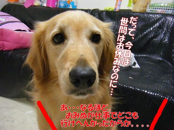DSCF1063_20111001221712.jpg
