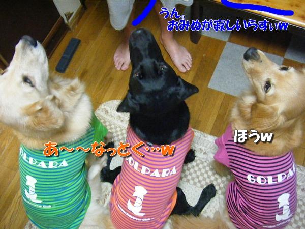 DSCF2019_20110909001330.jpg