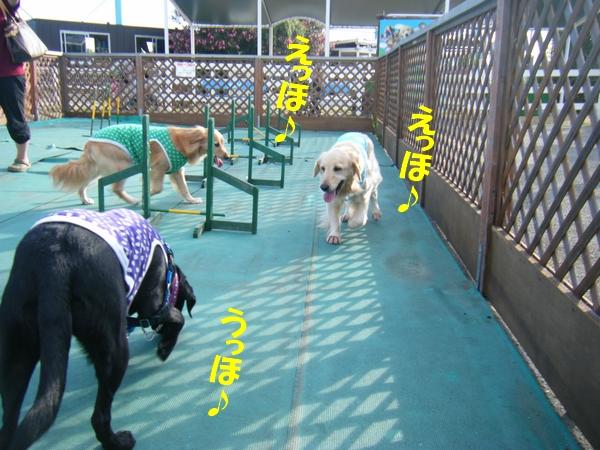 DSCF2077_20110729000553.jpg