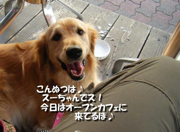 DSCF3001_20110712011139.jpg