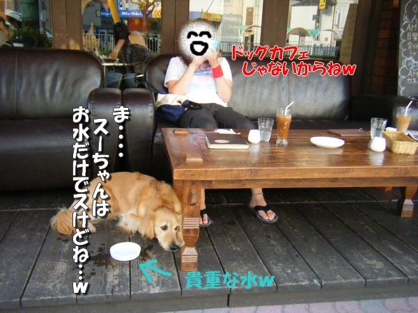 DSCF3009_20110811002023.jpg