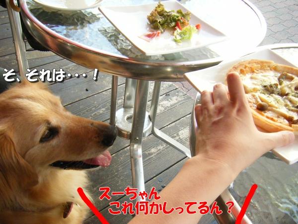 DSCF3019_20110712011136.jpg