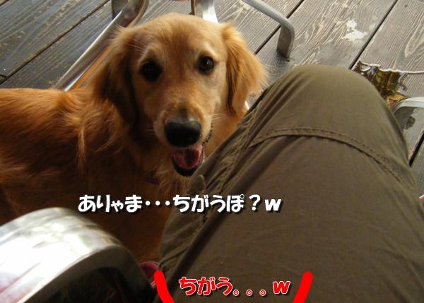 DSCF3028_20110712011224.jpg