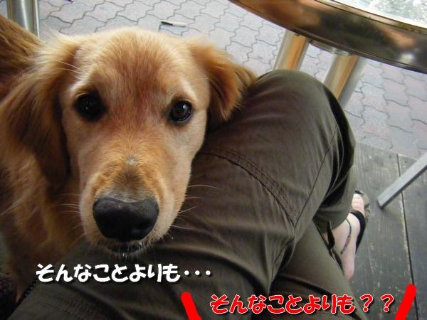 DSCF3032_20110712011223.jpg