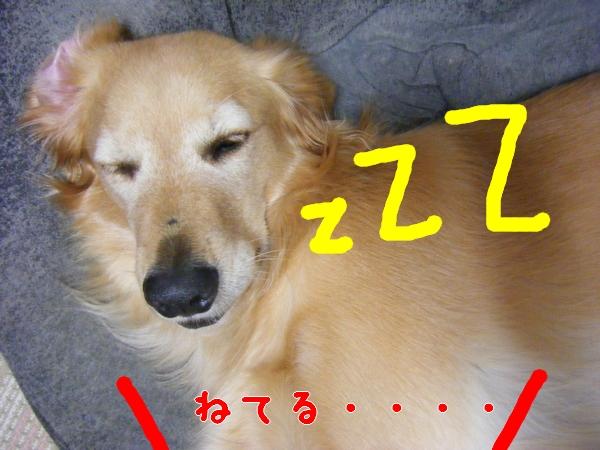 DSCF3045_20111008002729.jpg