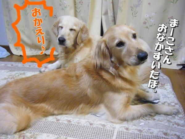 DSCF3058_20110812011323.jpg
