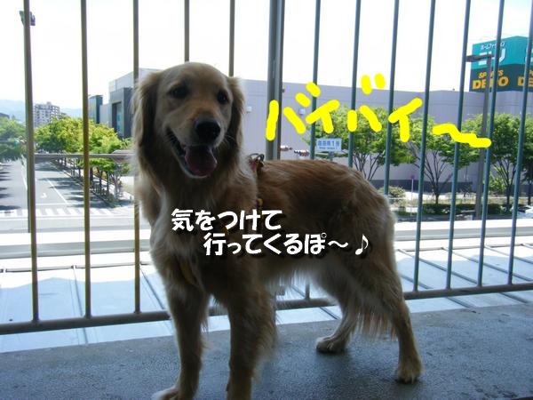 DSCF4015_20110530235823.jpg