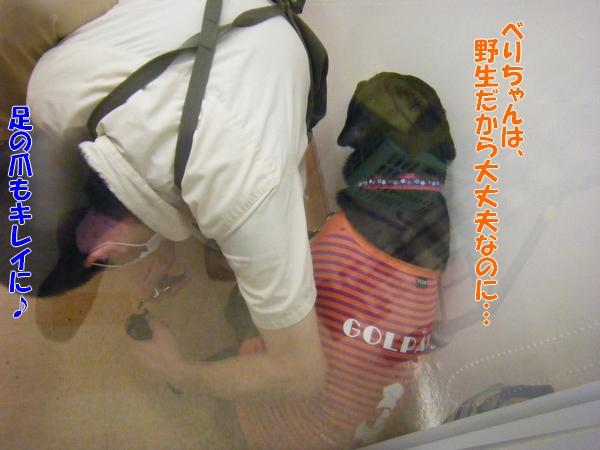 DSCF4019_20110913001356.jpg