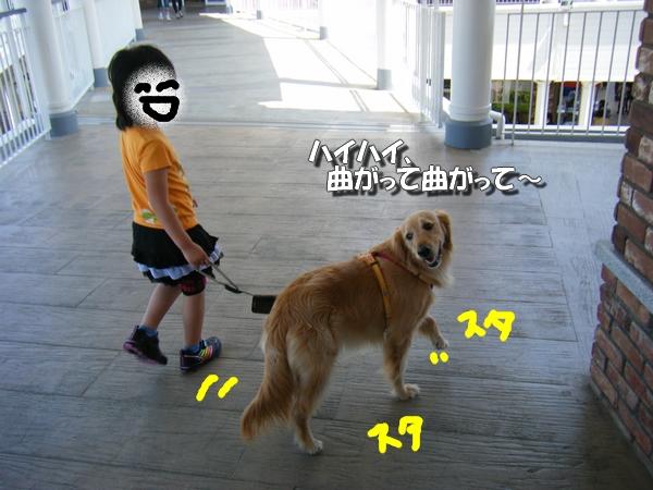 DSCF4031_20110526235611.jpg