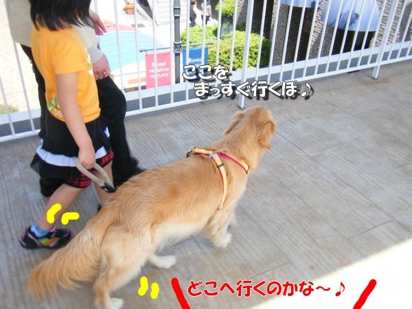 DSCF4036_20110526235608.jpg