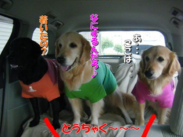 DSCF4037_20110913001259.jpg