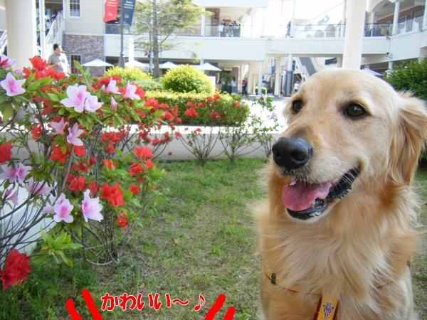 DSCF4046_20110531001131.jpg