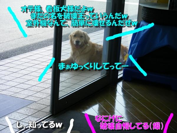 DSCF4068_20110523235015.jpg