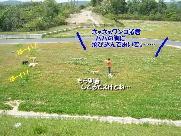 DSCF4069_20110524232327.jpg