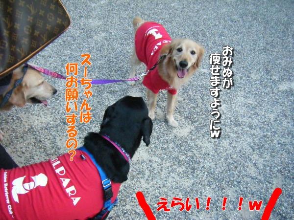 DSCF4069_20110915000010.jpg