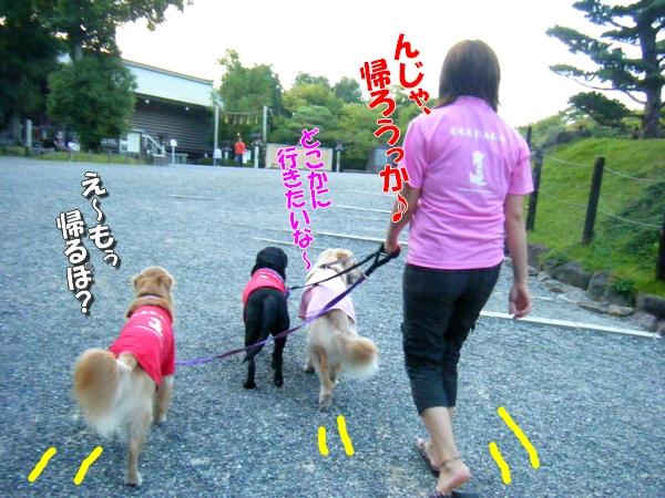 DSCF4085_20110915000007.jpg