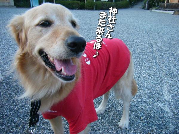DSCF4088_20110915000007.jpg