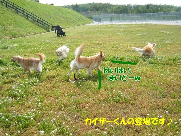 DSCF4089_20110524232405.jpg