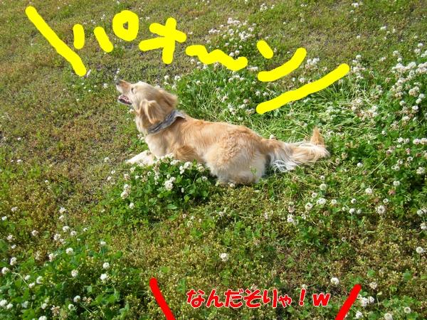 DSCF4095_20110525234957.jpg