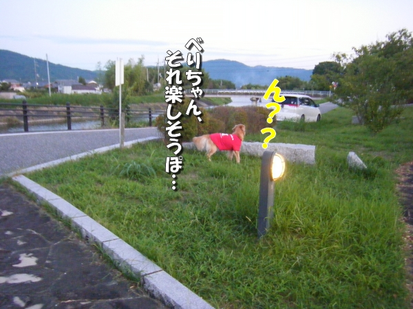 DSCF4148_20110918235954.jpg