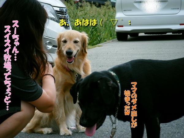DSCF4169_20110920233629.jpg