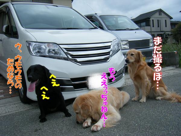 DSCF4221_20110920233624.jpg