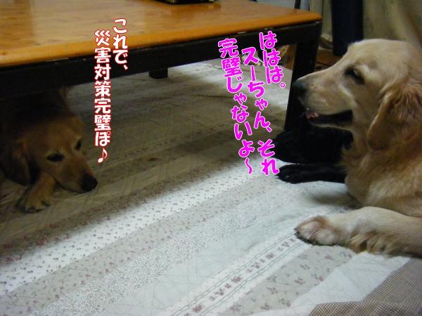 DSCF4245_20110922011523.jpg