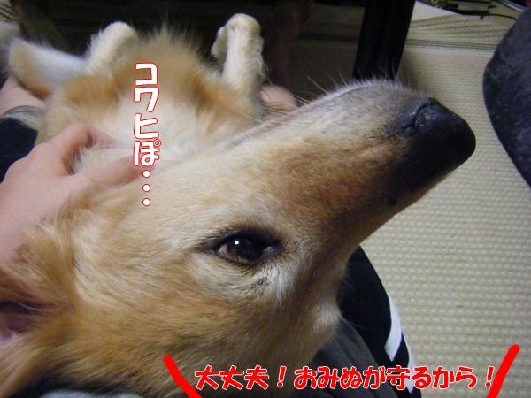DSCF4258_20110922005646.jpg