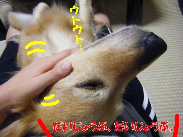 DSCF4259.jpg