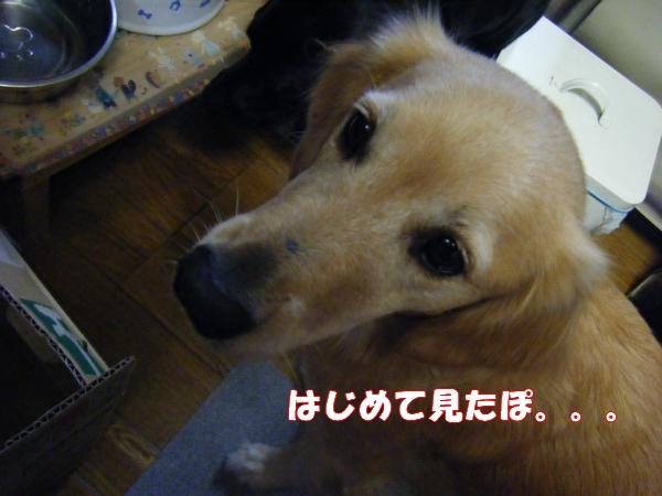 DSCF5007_20111010202544.jpg