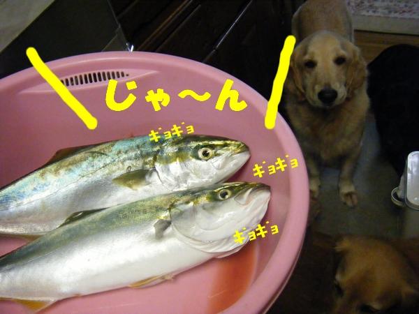 DSCF5011_20111010202542.jpg