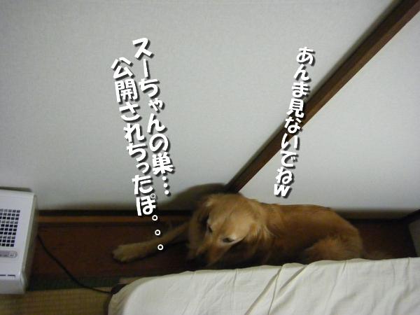 DSCF5014_20110715003341.jpg