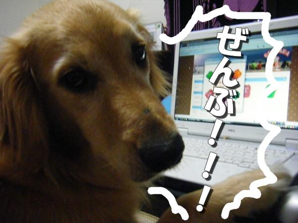 DSCF6011_20110730001407.jpg
