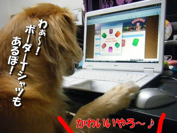 DSCF6013_20110730001407.jpg