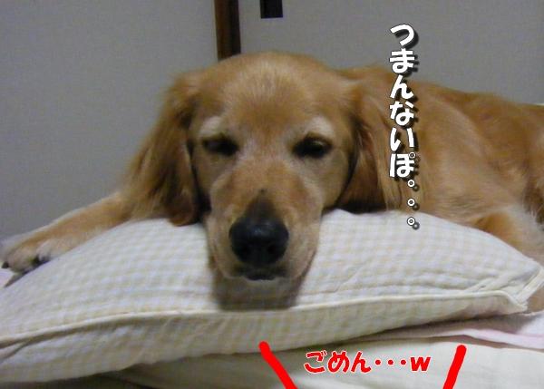 DSCF6021_20110730011616.jpg