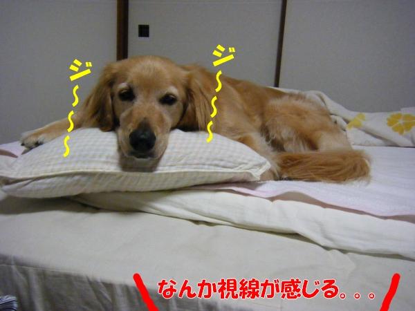 DSCF6022_20110730011616.jpg